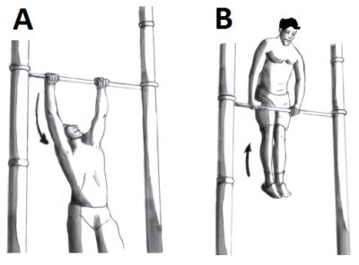 muscle-up posture